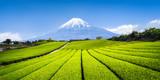 Teeanbau in Japan mit Berg Fuji im Hintergrund - 159587319