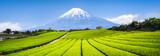 Berg Fuji und Teefelder in Japan - 159587363