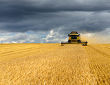 Combine Harvester Cutting Wheat, Summer Landscape of endless Fields under dark cloudy sky - 159609516