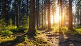 Piesze wycieczki Ścieżka do lasu o zachodzie słońca