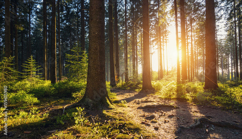 Foto op Aluminium Chocoladebruin Hiking Path in to the Forest at sunset