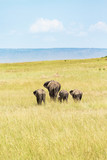 Elephants walking on the savannah
