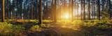 Las o zachodzie słońca panorama