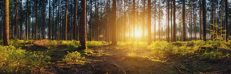 Wald mit bei Sonnenuntergang panorama