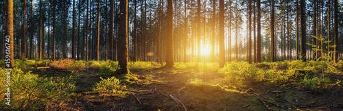 Las z panoramą o zachodzie słońca