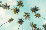 Coconut palm tree on sky background.   Low Angle View. Toned image - 159638526