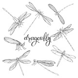 Dragonfly. Vector contour illustration on white background. Isolated elements for design, eight insects. - 159658741