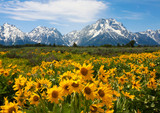 Wildflowers at the Grand Tetons - 159664532