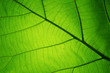 Quadro Leaf texture pattern for spring background