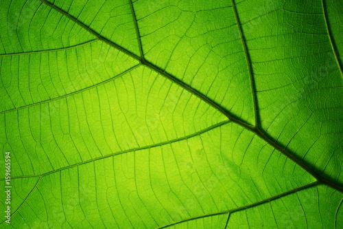 Leaf texture pattern for spring background