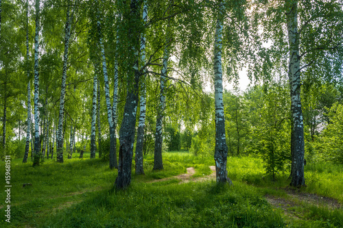 In the birch grove on a summer day.
