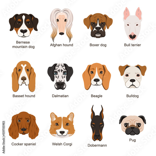 Deurstickers Babykamer Different dogs. Vector illustrations set isolate on white
