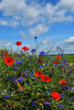 Fototapeta Maki - Polne kwiaty © serek76