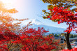 Quadro Mount Fuji and red maple tree