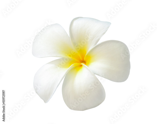 Canvas Plumeria Plumeria on white background