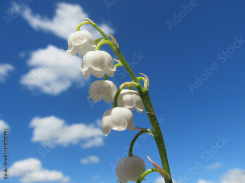 Fotobehang Lelietjes van dalen Lilies of the valley in the sky.
