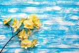 A branch of yellow orchids lies on a blue wooden background