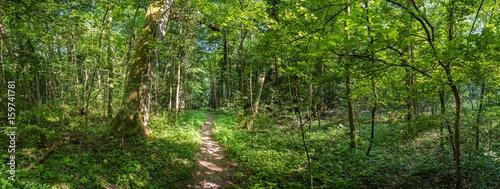 Foto op Plexiglas Weg in bos Urwald Pfad Panorama