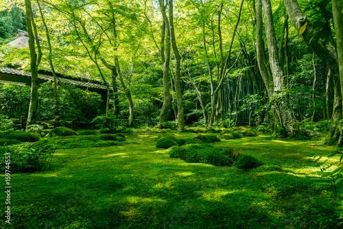 Papiers peints Kyoto Giou-ji temple's Garden of mosses