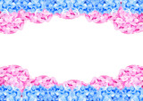 Pink and blue hydrangea frame on white with space background