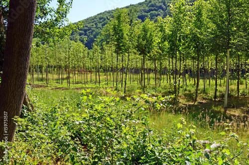 Gärtnerei, Bäume
