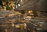 Autumn Leaves on a FootBride