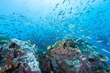 School of fish on the rock