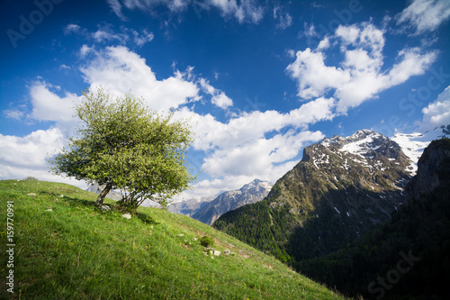 Altitude tree in the mountains French Alps Poster