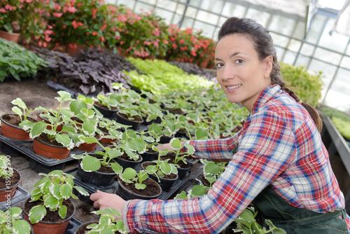 in a vegetable nursery