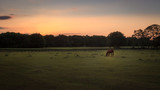 Horse in a Green Field Feeding At Sunset - 159775310