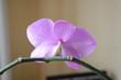 Орхидея вид сзади