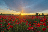 Sunset over a poppy meadow