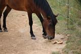 cheval qui i mange
