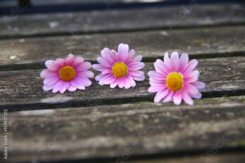 Blüten Blätter Herz Poster