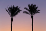 silhouette of two palm trees against sky at sunrise, Egypt