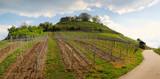 Panorama vignoble et coteaux