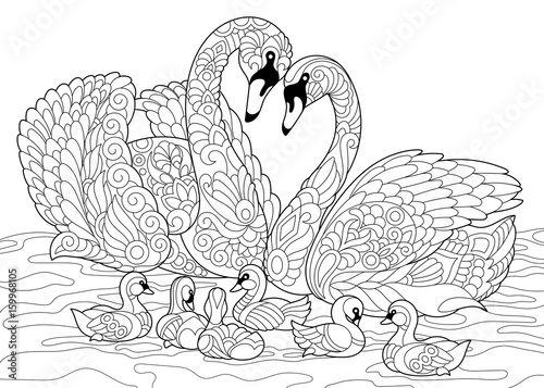 Coloring book page of swan birds family. Freehand sketch drawing for adult antistress colouring with doodle and zentangle elements.