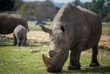 Morning Tour at Safari Ramat Gan