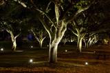 Spooky Trees at Night - 160020366