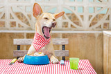 dog eating a the table with food bowl