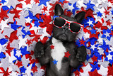 Fototapety independence day 4th of july dog