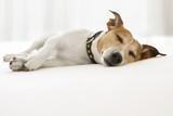 dog sick , ill or sleeping