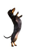 high five pushing dog