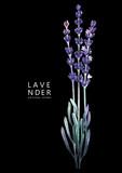 Watercolor lavender bouquet - 160448556