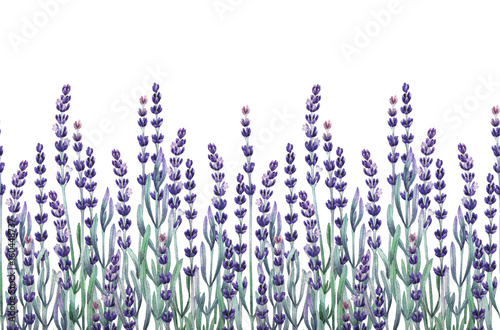 Watercolor lavender design - 160448737