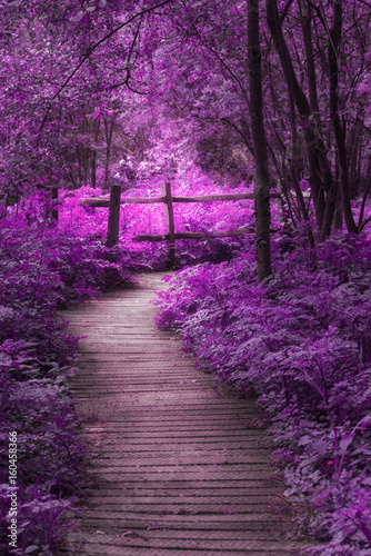 Staande foto Snoeien Beautiful surreal purple landscape image of wooden boardwalk throughforest in Spring