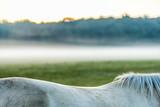 Pferderücken im Sonnenaufgang bei Frühnebel, Nahaufnahme