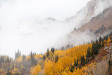 Foggy Cloudy Mountain Autumn Forest