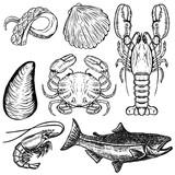 Set of hand drawn seafood illustrations. Design elements for poster, menu. Oyster, crab, shrimp, salmon, lobster. Vector illustration