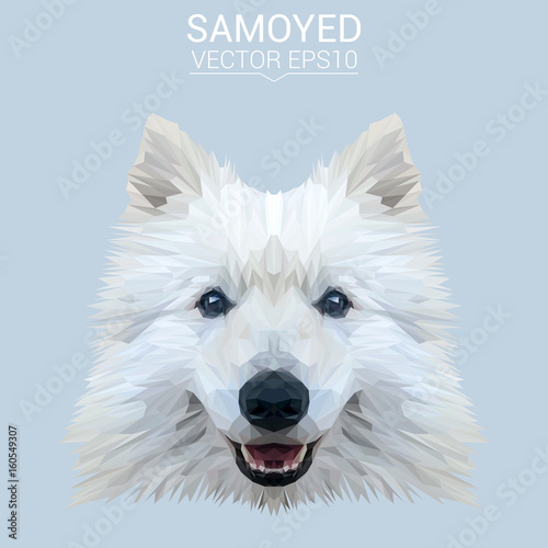 White Samoyed dog animal low poly design. Triangle vector illustration. © shekularaz